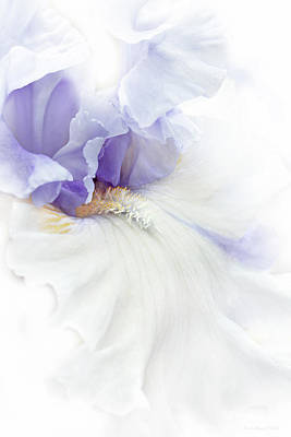 Softness Of A Lavender Iris Flower Art Print