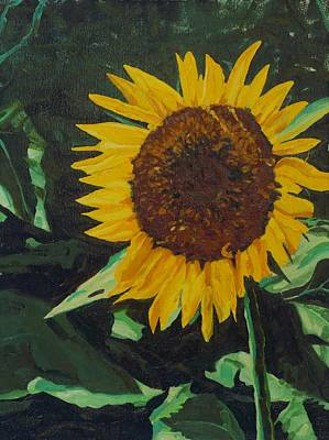 Painting - Solitary Sunflower by Phil Chadwick