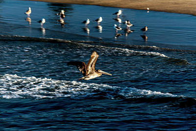 Photograph - Solo Flight by Eric Christopher Jackson