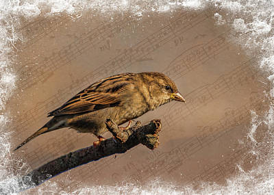 Photograph - Song Bird by Cathy Kovarik
