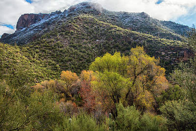 Photograph - Sonora Desert Fall Colors With Snow by Dave Dilli