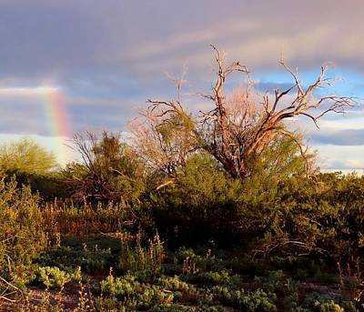 Photograph - Sonoran Desert Spring Rainbow by Judy Kennedy