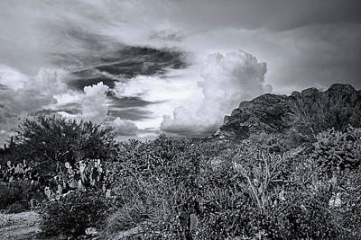 Mark Myhaver Rights Managed Images - Sonoran Monsoon Season m1603 Royalty-Free Image by Mark Myhaver