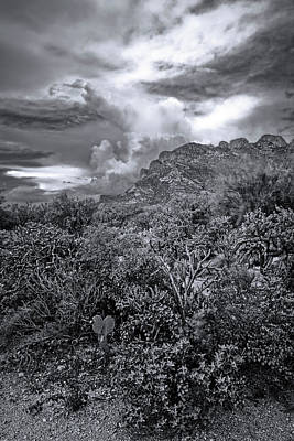 Mark Myhaver Rights Managed Images - Sonoran Monsoon Season m1649 Royalty-Free Image by Mark Myhaver