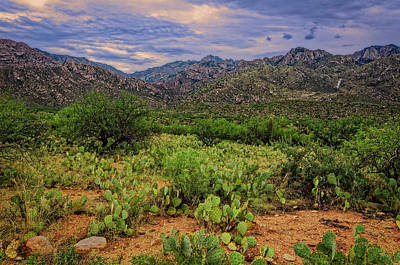 Photograph - Sonoran Vista H1131 by Mark Myhaver