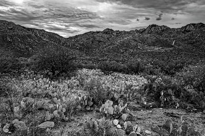 Mark Myhaver Photo Rights Managed Images - Sonoran Vista h1132 Royalty-Free Image by Mark Myhaver