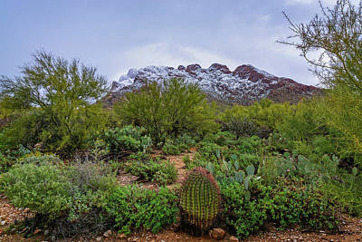Photograph - Sonoran Winter H1920 by Mark Myhaver