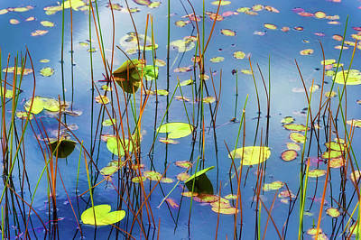 Photograph - Soothing Reflections by Dee Browning