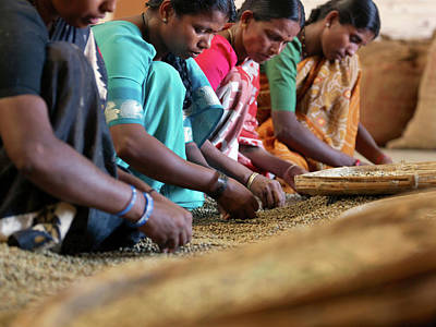 Kerala Photograph - Sorting Coffee Beans By Hand In Coffee by Cultura Rm Exclusive/philip Lee Harvey