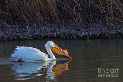 Claude Monet -  Soul pelican in search of fish by Jeff Swan