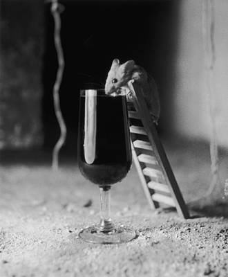 Food Photograph - Soused Mouse by Charles Hewitt