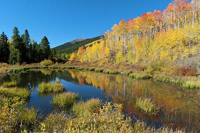 Photograph - South Elbert Autumn Beauty by Cascade Colors