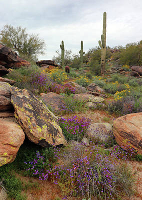 Granger - South Mountain Wildflowers by David T Wilkinson