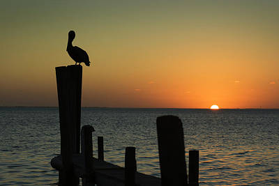 Bird Photograph - South Padre Island, Texas Sunset With by Yangyin