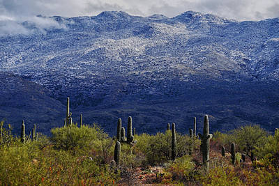 Rincon Mountains Wall Art - Photograph - Southern Arizona Snow by Chance Kafka