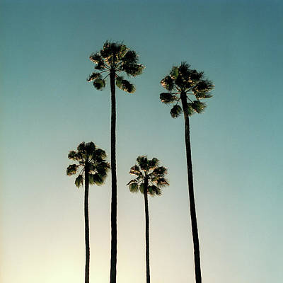 Spain Photograph - Spain, Sevilla, Palms Swaying In The by Mark Horn