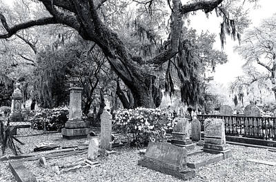 Photograph - Spanish Moss At Magnolia Cemetery by John Rizzuto