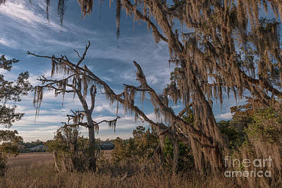 Photograph - Spanish Moss Factory by Dale Powell