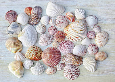 Photograph - Sparkling Sea Jewels by Kathi Mirto