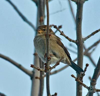 Photograph - Sparrow by Ann E Robson