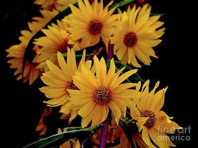 Photograph - Special Invitation Sunflowers by Sherry Little Fawn Schuessler