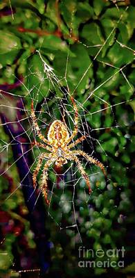 Photograph - Spider In Waiting by Jolanta Anna Karolska
