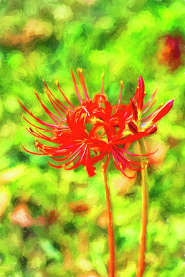 Photograph - Spider Lily Cezanne by Kay Brewer