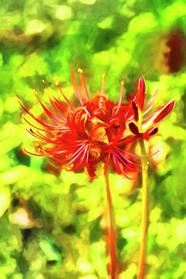 Photograph - Spider Lily O'keefe by Kay Brewer