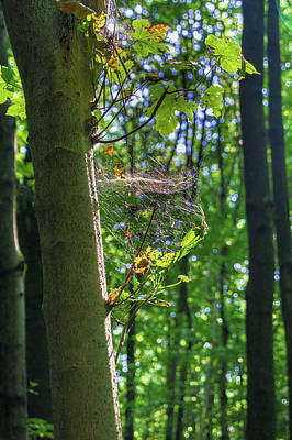 Photograph - Spider Web In A Forest by Sun Travels