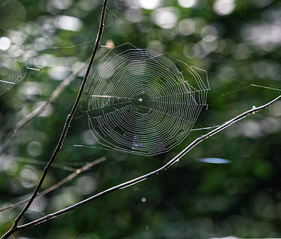 Photograph - Spider Web by Paul Ross