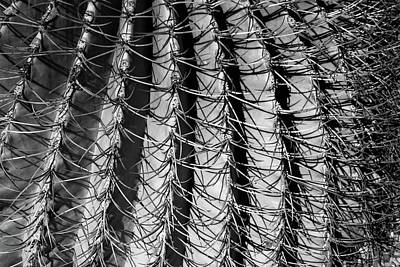 Photograph - Spiny Fortress by Lon Dittrick