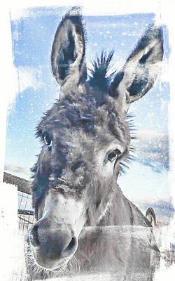 Photograph - Spirit Animal by Jennifer Grossnickle