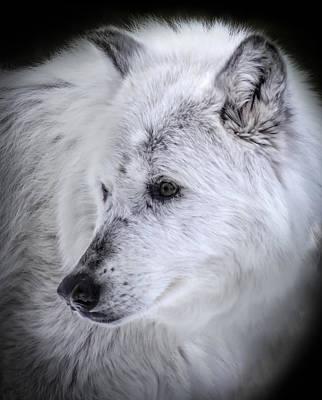 Photograph - Spirit Of The Wild by Karen Wiles