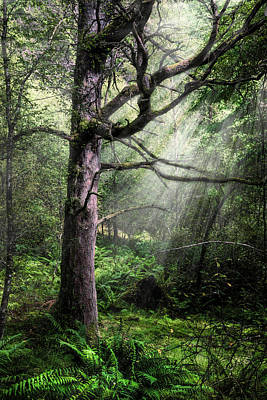 Photograph - Spiritual Forest by Debra and Dave Vanderlaan