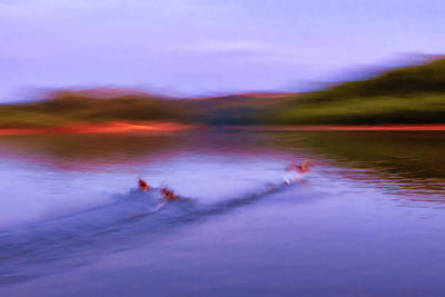 Photograph - Spooked Ducks by Robert FERD Frank