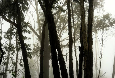 Spiderweb Photograph - Spooky Forest by Christopher Johnson