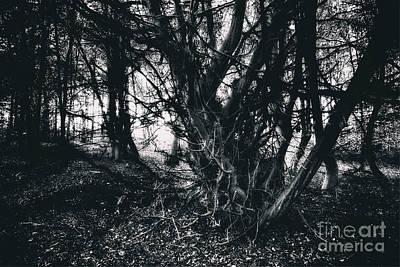 Digital Art - Spooky Tree by Nigel Bangert