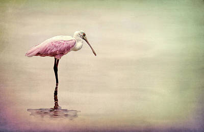 Spoonbill Mixed Media - Spoonbill Pink by Rosalie Scanlon