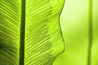 Spores Of A Fern Art Print