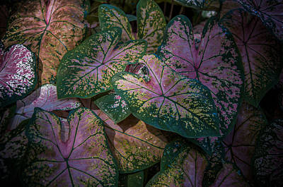 Photograph - Spotlight Botany by Krysten Elaine Brown