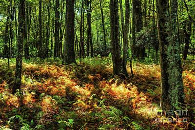 Photograph - Spotted Autumn Sunlight by Dan Carmichael