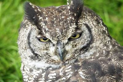 Photograph - Spotted Eagle Owl  by James Lamb