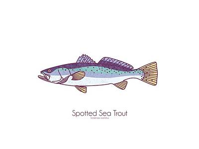 Digital Art - Spotted Sea Trout by Kevin Putman