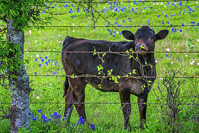 Photograph - Spring Babe In The Bluebonnets by Lynn Bauer
