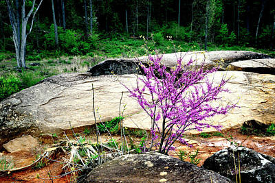 Photograph - Spring Blooms At Devils Den by Paul W Faust - Impressions of Light