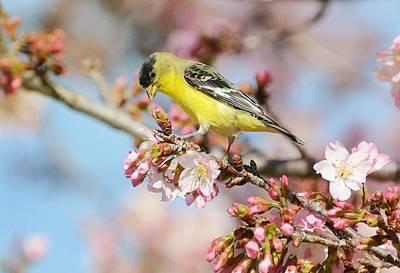 Photograph - Spring Blossom Buffet by Fraida Gutovich