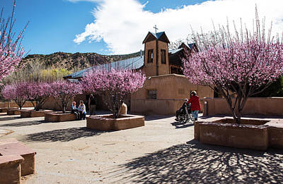 Photograph - Spring Blossoms And Morning Pilgrims by Tom Cochran