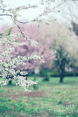 Photograph - Spring Blossoms On Tree Branches In Colorful Garden by Jelena Jovanovic