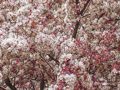 Photograph - Spring Blossoms by Phil Perkins