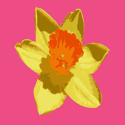 Digital Art - Spring Daffodil Isolated On Hot Pink by Taiche Acrylic Art